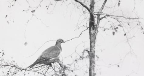 pigeon on a tree
