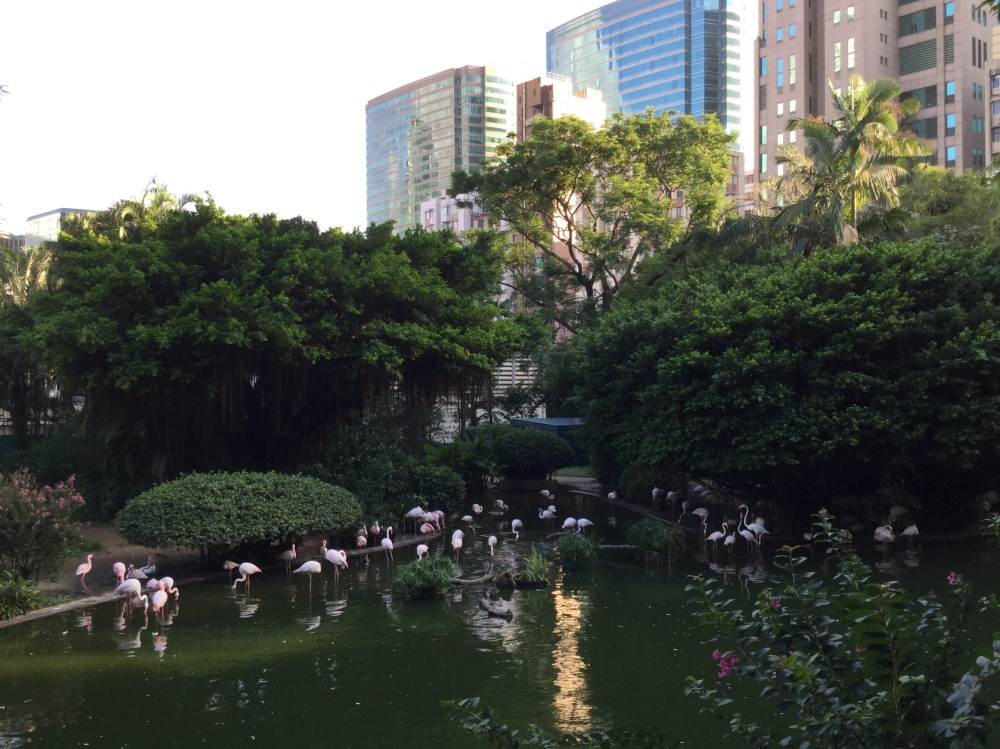 Kowloon Park Flamingos.jpeg